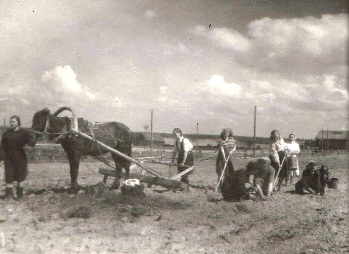 02.06.1955, п.Нянда. Первая борозда посева кукурузы. Семейный архив Геец (Богомолова) Ю.А., п.Урдома.