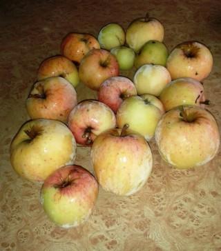 12. 15.10.13. Только что с яблони. Еще не оттаяли.