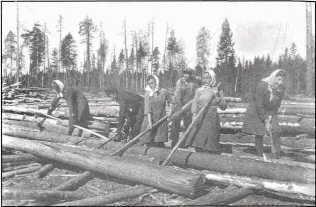 Ската леса в пучки